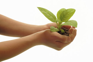 Growing Gratitude and Generosity
